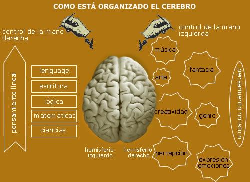 ¿Por qué algunas personas son zurdas? Causas, ventajas y desventajas Brainorg